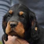 LouLou 7 Wochen alt